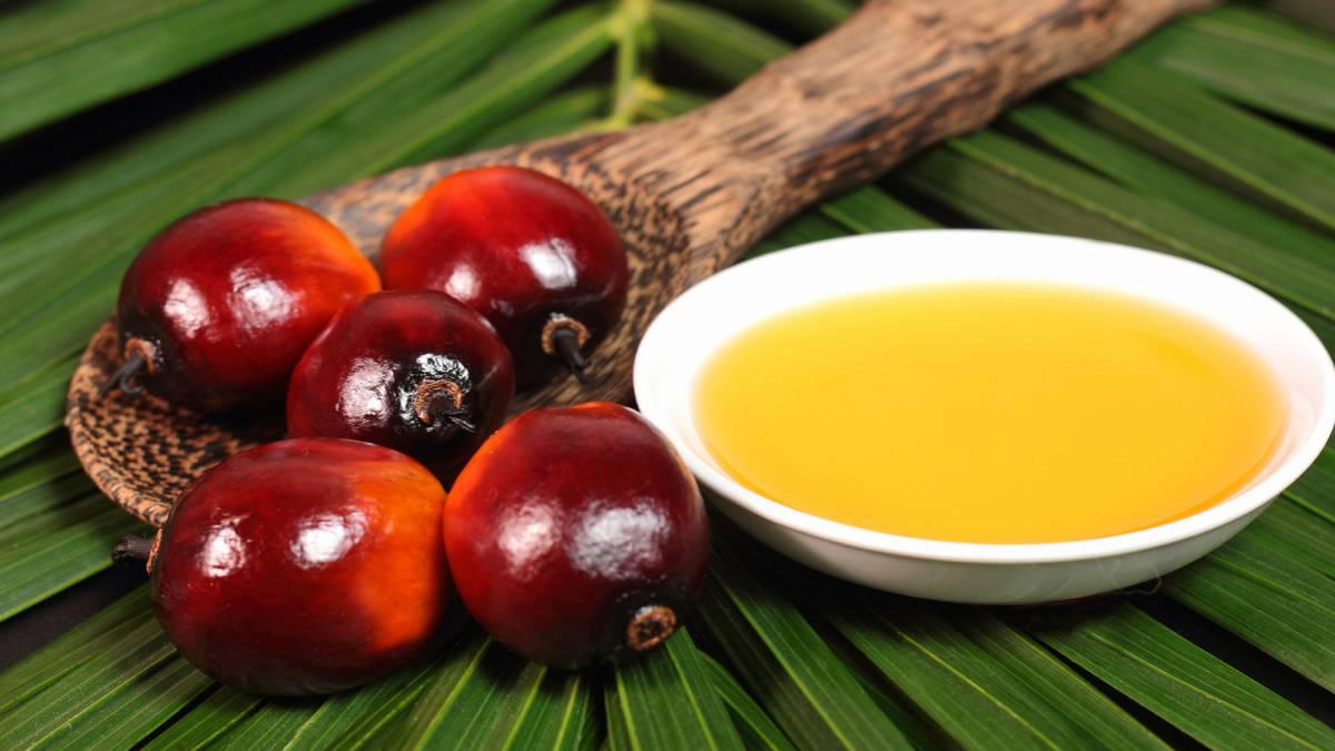 Origen del aceite de palma